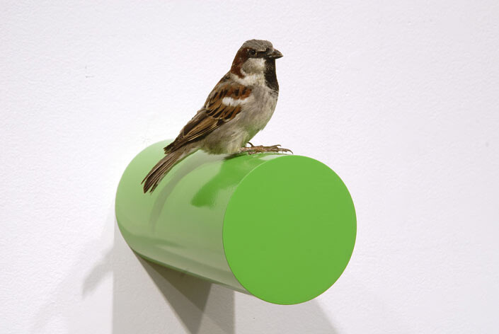 Michael Parekowhai Roy Huntington, 2004; sparrow, two pot paint, and aluminium; enquire