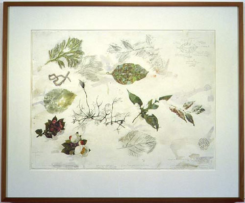 John Wolseley Lichens and liverworts on a leaf, Mt Kinabalu, 2001; watercolour on paper; 57 x 76 cm; enquire