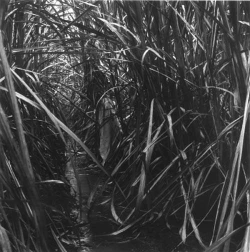 Simryn Gill #7, 1999; from the series Rampant; black and white prints on fibre paper, selenium toned; 22.5 x 25.5 cm; Edition of 10; Edition of 9 + AP 2; enquire