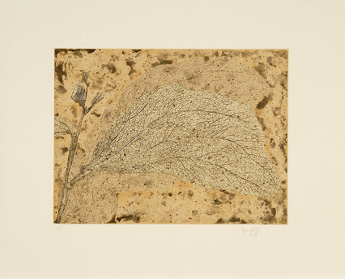 Fiona Hall Wattle and Mantid, 2006; from the series Insectivorous; etching; 39.5 x 48 cm; Edition of 15; enquire