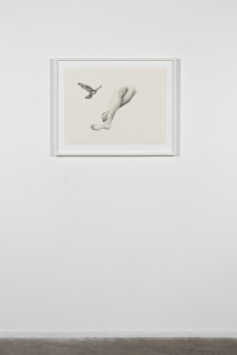 installation view; Patricia Piccinini Inseparable (Nankeen Kestrel), 2020; graphite on paper; 57 x 76 cm; 72.5 x 91 cm (framed); enquire