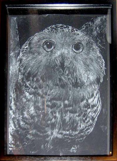 David Noonan Snowy Owl, 2002; gouache on paper; 35 x 24.5 cm; enquire