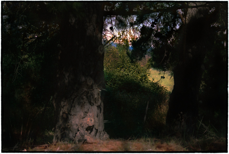 Bill Henson Untitled, 2018-19; CL GW SH2 N27; archival inkjet pigment print; 127 x 180 cm; edition of 5 + 2 AP; enquire
