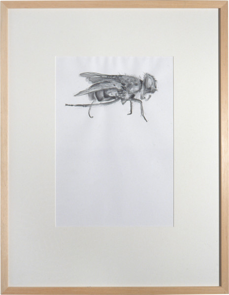 Nell Fly, 2002; watercolour on paper; 35.5 x 24.5 cm; enquire