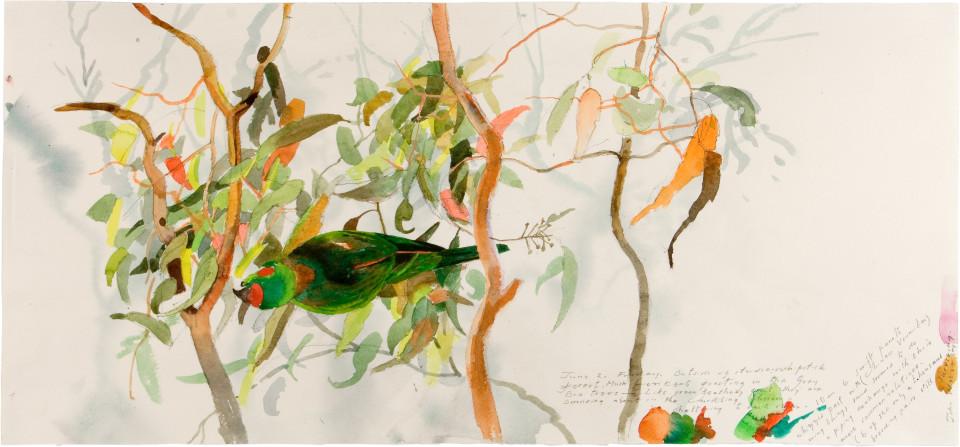 John Wolseley Musk Lorikeet 1 - Whipstick Forest, 2006; watercolour on paper; 61.5 x 102 cm; enquire