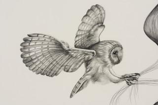 Patricia Piccinini Inseparable (Barn Owl) (detail), 2020; graphite on paper; 57 x 76 cm; 72.5 x 91 cm (framed); enquire