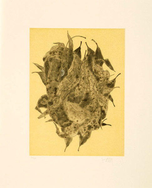 Fiona Hall Green Ant Nest, 2006; from the series Insectivorous; etching; 48 x 39.5 cm; Edition of 40; enquire