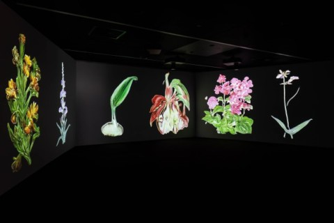 Event: Caroline Rothwell discusses her multi-channel projection 'Infinite Herbarium'