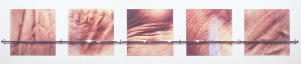 Julie Rrap Push & Pull, 1993-94; cibachrome colour photographs, hand rail in perspex and human hair; 120 x 120 cm cibachrome, 750 cm handrail; enquire