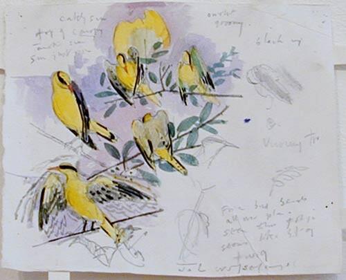 John Wolseley Black-naped orioles, 1998; watercolour on paper; 17.5 x 20 cm; enquire