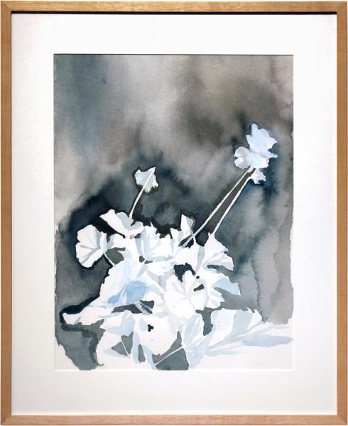 Glenn Sorensen Geranium, 2011; watercolour on paper; 49.5 x 40.5 cm; enquire