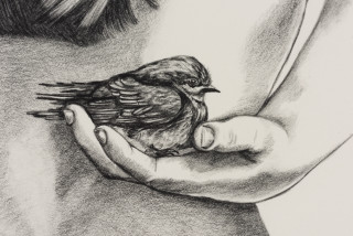 Patricia Piccinini Inseparable (Welcome Swallow) (detail), 2020; graphite on paper; 57 x 76 cm; 72.5 x 91 cm (framed); enquire