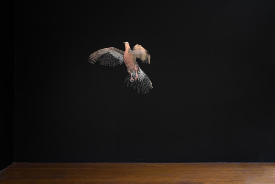 Mikala Dwyer and Gina Moore Pigeon, 2021; digital animation; Edition of 5; enquire