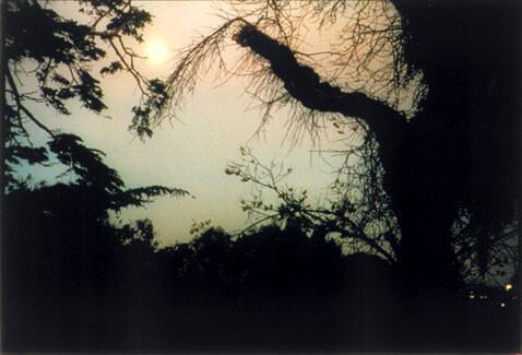 Bill Henson Untitled #65, 1998; CL SH 158 N25; Type C photograph; 127 x 180 cm; (paper size) Image size: 104 x 154 cm; Edition of 5 + AP 2; enquire